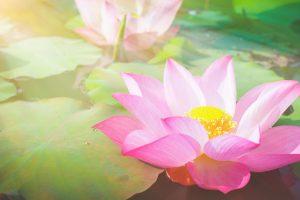 share-riviera-integrative-psychotherapist