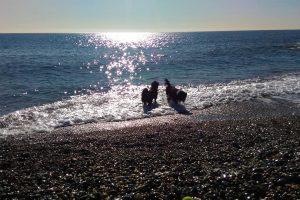 share-riviera-Traceys Riviera Pet Sitting